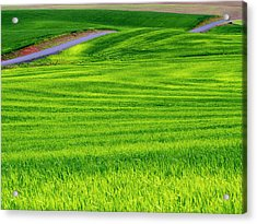 Usa, Idaho, Palouse, Rolling Green Acrylic Print
