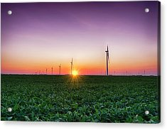 Usa, Indiana Soybean Field And Wind Acrylic Print by Rona Schwarz