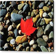 Usa, Maine, A Maple Leaf On A Rock Acrylic Print