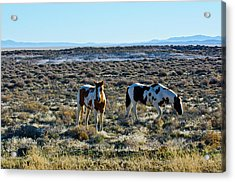 Usa, Nevada, Wild Horses Grazing Acrylic Print