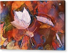 Usa, Northeast, Fall Leaves In Puddle Acrylic Print by Jaynes Gallery
