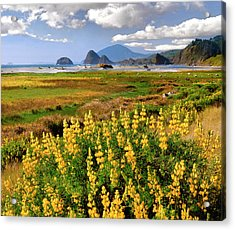 Usa, Oregon Landscape Of Yellow Lupine Acrylic Print by Jaynes Gallery