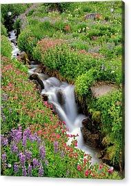 Usa, Oregon, Mt Hood Wilderness Acrylic Print by Jaynes Gallery