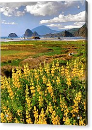 Usa, Oregon, Ophir Acrylic Print by Jaynes Gallery