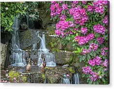 Usa, Oregon, Portland, Mallard Ducks Acrylic Print