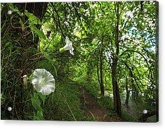 Usa, Oregon, Portland, Oak Bottoms Acrylic Print by Rick A Brown