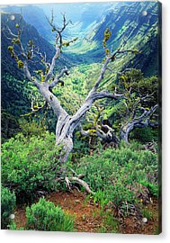 Usa, Oregon, View Of Steens Mountain Acrylic Print by Scott T. Smith