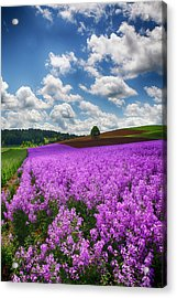 Usa, Oregon, Willamette Valley, Farming Acrylic Print by Terry Eggers
