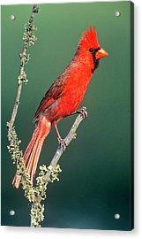 Usa, Texas , Rio Grande Valley, Mcallen Acrylic Print by Jaynes Gallery