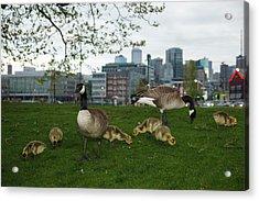 Usa, Washington, Seattle, South Lake Acrylic Print