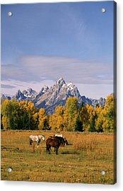 Usa, Wyoming, Horses In Grand Teton Acrylic Print
