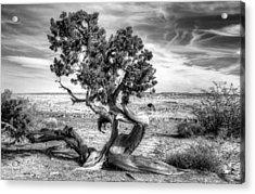 Utah Desert Survivor Acrylic Print by Geraldine Alexander