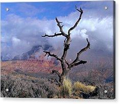 Utah Usa Pinyon Pine Snag Above Virgin Acrylic Print