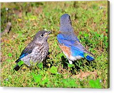 A Mothers Care Acrylic Print by David Lee Thompson
