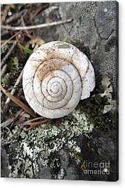 Acrylic Print featuring the photograph Vacant Shell by Devin  Cogger