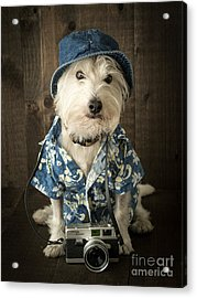 Acrylic Print featuring the photograph Vacation Dog by Edward Fielding