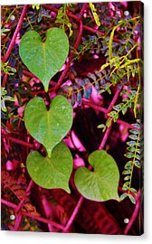 Valentine Au Natural Acrylic Print by Craig Wood