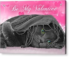 Valentine Cat Acrylic Print by Joann Vitali