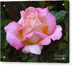 Valentine Pink Rose Acrylic Print