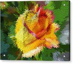Valentine Rose Acrylic Print by Anne Mott