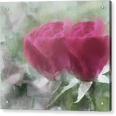 Valentine's Roses Acrylic Print