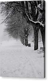 Vancouver Winter Trees Acrylic Print