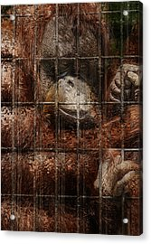 Vanishing Cage Acrylic Print by Jack Zulli