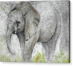 Vanishing Thunder Series-baby Elephant I Acrylic Print