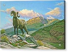 Vantage Point - Bighorn Acrylic Print by Paul Krapf