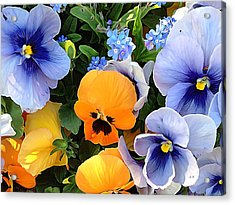 Acrylic Print featuring the photograph Various Violets by Gabriella Weninger - David