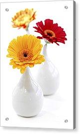 Vases With Gerbera Flowers Acrylic Print by Elena Elisseeva