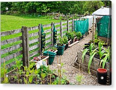 Vegetable Garden Acrylic Print by Tom Gowanlock