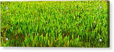 Vegetation, Boynton Beach, Florida, Usa Acrylic Print by Panoramic Images