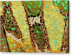 Veiled Chameleon Skin Acrylic Print by Nigel Downer
