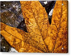 Acrylic Print featuring the photograph Veins by Anthony Citro