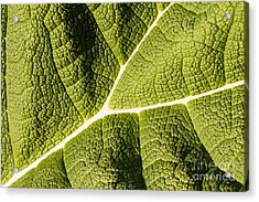 Acrylic Print featuring the photograph Veins Of A Leaf by John Wadleigh