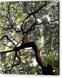 Veins Of Life Acrylic Print