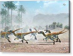 Velociraptor Dinosaurs Acrylic Print
