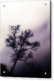 Velvet Mist Acrylic Print