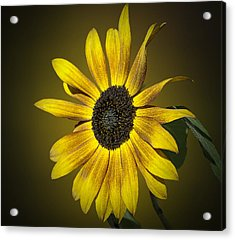 Velvet Queen Sunflower Acrylic Print