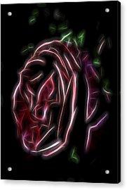 Velvet Rose 1 Acrylic Print