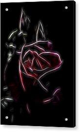 Velvet Rose 2 Acrylic Print