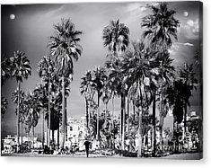 Venice Beach Palms Acrylic Print by John Rizzuto