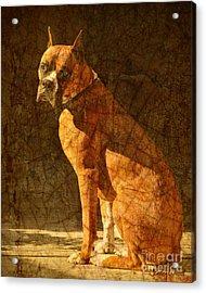 Vermeer's Dog Acrylic Print by Judy Wood