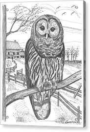Acrylic Print featuring the drawing Vermont Barred Owl by Richard Wambach
