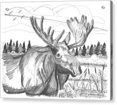 Acrylic Print featuring the drawing Vermont Bull Moose by Richard Wambach