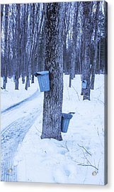 Vermont Maple Syrup Buckets Acrylic Print by Tom Singleton
