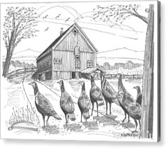 Acrylic Print featuring the drawing Vermont Wild Turkeys by Richard Wambach