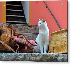 Vernazza Shop Cat Acrylic Print by Amy Fearn