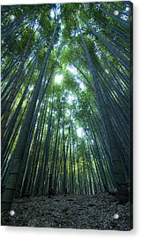 Vertical Bamboo Forest Acrylic Print by Aaron Bedell